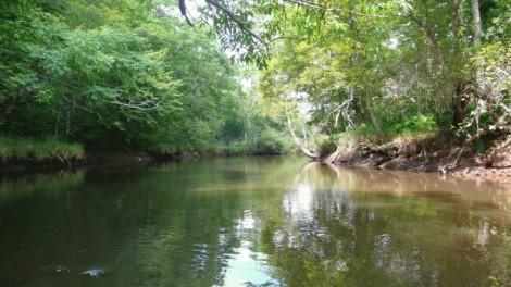 ヒグマのいる川1